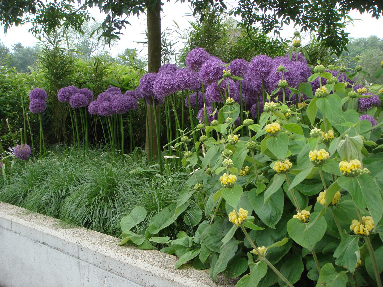 Tuin Hagen Soorten : Kleur in de tuin tuincentrum roegiers